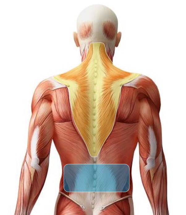 筋肉疲労が発生する場所